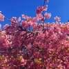 春の写真集