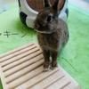 ウサギは隅っこがお好き?ちまきお気に入りの場所♪