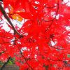 2020/12/13 法華経寺~葛飾八幡宮