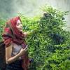 地方で年商2億円を稼ぐ農業!秋田県の女性農家が教えてくれる稼げる人と稼げない人の決定的な違い