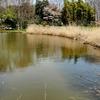 しょうちゃん池(東京都東村山)