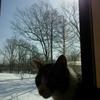 窓を見るみーちゃん、小説更新♪