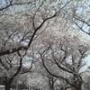 春...?