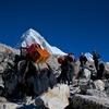 エベレストトレッキング8日目A ロブチェ4930m→ゴラクシェプ5150m 登りは最終日!頑張るぞ