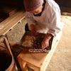 鳥害除けを願う カラスヨバリの小豆団子