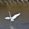冬・渡り鳥の季節