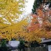 途中峠から大原・八瀬・京都市内へ、「還来神社」