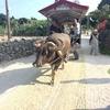 石垣島への旅 その① 竹富島の集落
