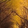 『秋の日は、干物の匂ひがするよ』中原中也
