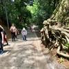 高尾山 薬王院参道 1号路 徒歩で登山(清滝駅手前〜高尾山駅まで)舗装道路... 後半の急傾斜はキツイ