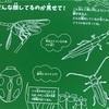 スクラッチブック こん虫   あたり前田のクリケット