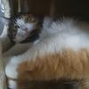 【愛猫日記】毎日アンヌさん#267