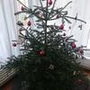 ☆クリスマスツリー回収日