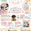 【チラシ制作】妊活・婦人科系サロン ほの香様
