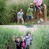 15日(金)から富士山こどもの国でススキの迷路開催中