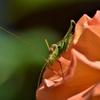 昆虫食の利点とは?初心者でも食べやすいおすすめの昆虫食