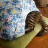 308 ウチの猫 4