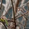日本 2月28日 散歩道の野鳥たち