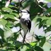 沖縄の野鳥、首都圏で目撃相次ぐ 温暖化で北上か