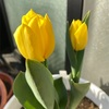 花が開いてきたよ^ ^