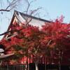 E-PL6 上野公園の紅葉