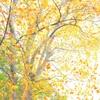 上野公園の紅葉④(桜や楓や銀杏だけじゃなく)