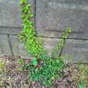 植えた草木レビュー2