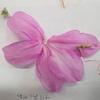 ツツジの花ってどんな花? その2