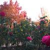 紅葉!庄堺公園