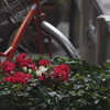 Sony NEX-7 + P.Angenieux Paris Type P21 180mm F4.5(Exakta mount)