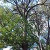 さよなら庭の木 Ash