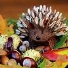 食欲の秋・スポーツの秋・ホットヨガの秋!秋のホットヨガで寒い冬・太る冬も怖くない身体づくりをはじめよう♪