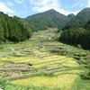 浜ちゃん日記     愛知県新城市四谷の千枚田を訪ねて