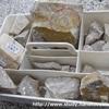 化石発掘体験ができるフォッサマグナミュージアムが面白い!