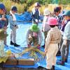 Reisanbau der 3.Klasse         3年生の稲刈り.