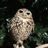 【京都のフクロウの森】フクロウの宝石箱や〜!フクロウに触れて心が通い合う癒しのスポット。