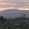 蕎麦畑と夜明けと雀