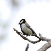 【野鳥】No.9 新潟 春の野鳥