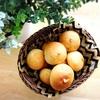 手作り丸パン(プレーン、くるみ&チーズ)