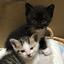 【保護|ブログ】やれるだけのことをやろう ~ねこさん、増えました(9話)~【保護猫の多頭飼い】