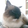 時候の挨拶なんて、猫が考えてると思う?