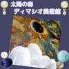 世界最大の油彩画! 美術館で観てきました✨ 🌞太陽の森 ディマシオ美術館 ミニチュア陶芸 ①