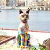 マルタ留学 〜マルタは猫の楽園〜