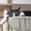猫のベストポジションは、思わぬ場所にある【冬編】
