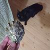 今日の黒猫モモ&白黒猫ナナの動画ー883