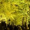歴史館ライトアップの夜