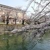 京都さくら散歩(哲学の道)