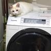 の上のライチ #2 洗濯機