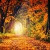 平成最後の秋は激動の日々。切迫早産・入院・帝王切開を乗り越えて。