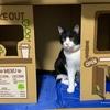 おすすめ猫用トイレ(`・ω・´)ゞ